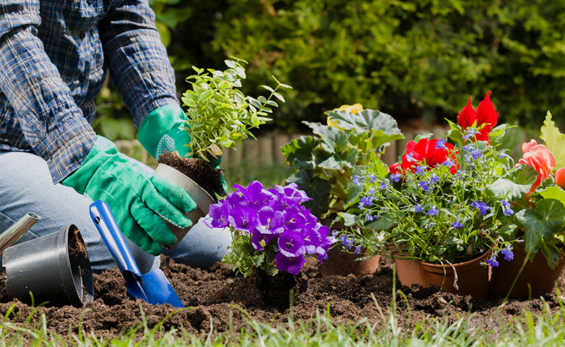 planting flowers for inexpensive backyard idea